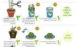 گیاهان معجزه آسا - اینفوگرافیک